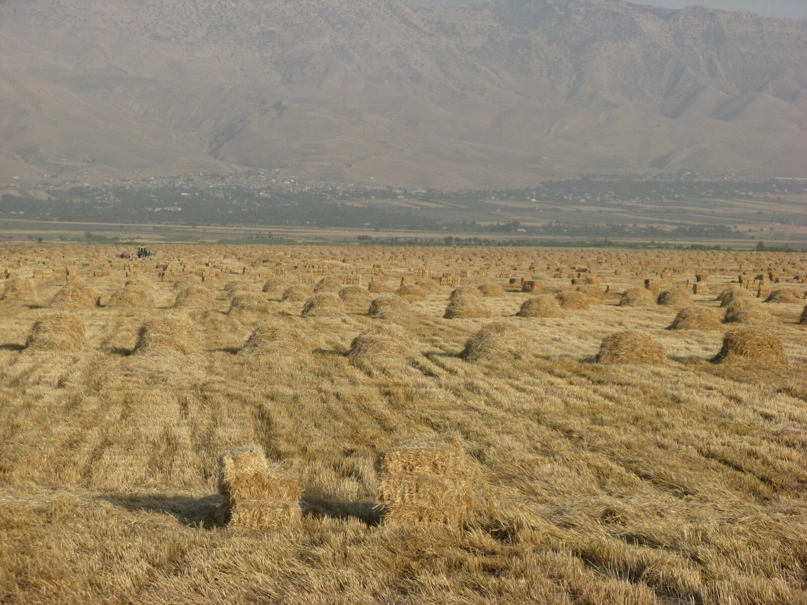 Agriculture in Central Asia: Unlocking the Potential  An